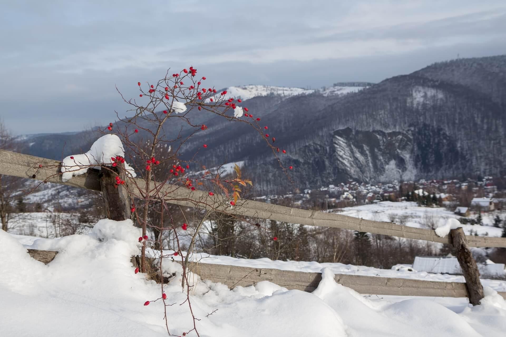 Зима в Яремче